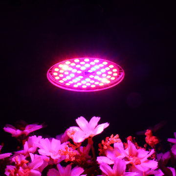 LED-lamp Groeilicht E27 60W 2835 SMD Full Spectrum Plant Hydroponic Aquarium AC85-265V